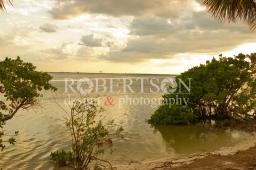 Sunset Mangroves